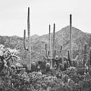 A Gathering Of Cacti Art Print