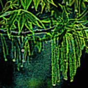 A Glow With Dew Art Print