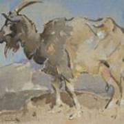 A Goat By Joseph Crawhall 1861-1913 Art Print