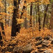 A Golden Autumn Forest  Art Print