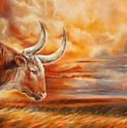 A Great Texas Longhorn Steer Inspired The Bevo Song Art Print