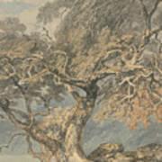 A Great Tree Art Print