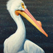 A Great White American Pelican Art Print by James W Johnson