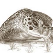 A Green Sea Turtle In Earthtones Art Print