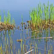 A Greening Marshland Art Print