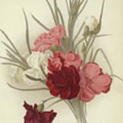 A Group Of Clove Carnations Art Print