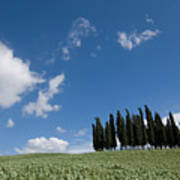A Group Of Cypress Trees Dot A Tuscan Art Print