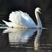 A Happy Swan Art Print