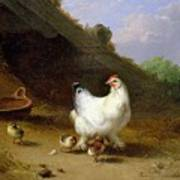 A Hen With Her Chicks Art Print
