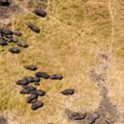 A Herd Of 100+ Elephants, Sw Corner Art Print
