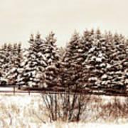 A Herd Of Trees Art Print