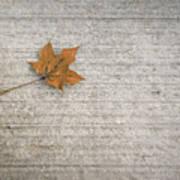 A Hint Of Autumn Art Print