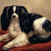 A King Charles Spaniel Seated On A Red Cushion Art Print
