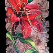A Lily Fresco Art Print