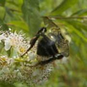 A Little Bee-hind Art Print