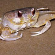A Little Crabby Art Print