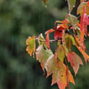 A Little Rain Must Fall Art Print