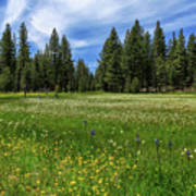A Meadow In Lassen County Art Print