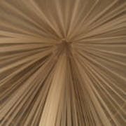 A Mosquito Net, Viewed From The Inside Art Print