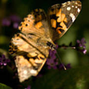A Painted Lady Butterfly At The Lincoln Art Print