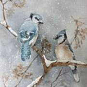 A Pair Of Jays Art Print by Bobbi Price