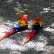 A Pair Of Parrots Art Print
