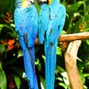 A Pair Of Parrots Art Print