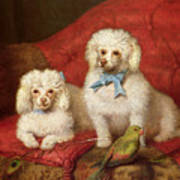 A Pair Of Poodles Art Print