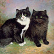 A Pair Of Pussy Cats Art Print