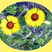 A Pair Of Wild Susans Art Print