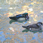 A Pair Of Wood Ducks Art Print