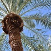 A Palm In The Sky Art Print