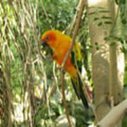 A Parakeet In Paradise Art Print