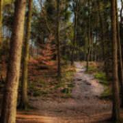 A Path Through The Woods Art Print