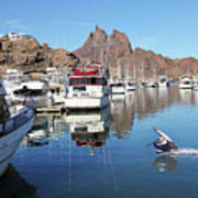 A Pelican Lands In The Old San Carlos Marina, Guaymas, Sonora, M Art Print