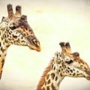 A Perfect Pair- Masai Giraffe Art Print