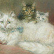 A Persian Cat And Her Kittens Print by Maud D Heaps