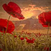 A Poppy Kind Of Morning Art Print by Debra and Dave Vanderlaan