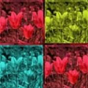 A Quadruple Of Tulips Art Print