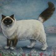 A Himalayan Cat Art Print