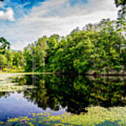 A Reflected Forest On A Lake With Lily Pads Art Print