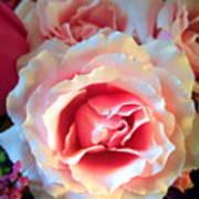 A Romantic Pink Rose Art Print