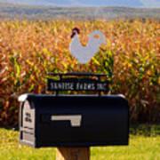 A Rooster Above A Mailbox 1 Art Print