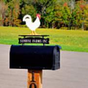 A Rooster Above A Mailbox 3 Art Print