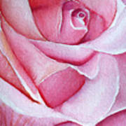A Rose For You Art Print