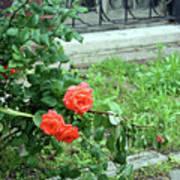 A Rose Is Down Art Print