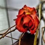 A Rose On Bamboo Art Print