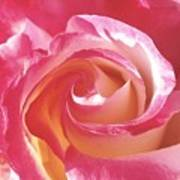 A Rose's Heart  Art Print
