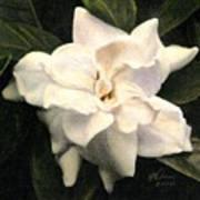 A Scent Of Gardenia Art Print