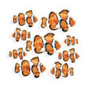 A School Of Clown Fish Art Print